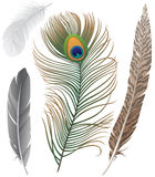 Feathers. Close-up of 4 bird feathers Stock Photo