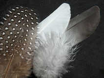 Feathers. Various feathers on black background Royalty Free Stock Photography