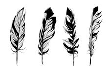 Feathers Royalty Free Stock Photos