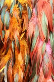 feathers Stock Images