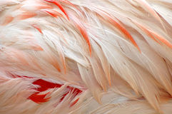 Feathers Stock Image