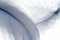 Feathers 3 Royalty Free Stock Image