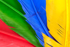 Feathers. Red, Green, Blue and Yellow Feathers Stock Photo