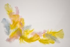 Feathers. Easter background made of colorful feathers Royalty Free Stock Photo