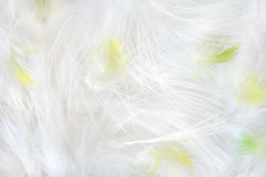 Feathers. Simple background - white, yellow and green feathers Royalty Free Stock Photo