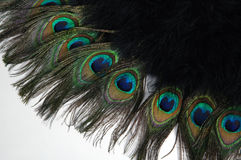 Feathers. Fanned out Peacock feathers with eyes royalty free stock image