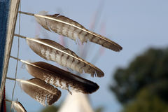 Feathers. On a staff at a Pow Wow with TeePee in background Stock Image