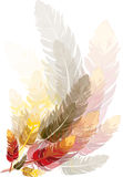 Feathers. Vector Graphic - brown, red and yellow feathers, created in Illustrator CS3 Stock Image
