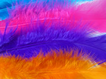 Feathers. Colorful feathers Stock Photography