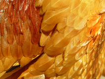 Feathers. Rooster feathers close up Stock Photo