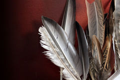 Feathers. An assortment of birds feathers in a landscape format set against a dark red grunge style backdrop Stock Photos