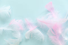 Feathers abstract background. Background for design with soft colorfull feathers pattern. Soft fluffy feathers on Royalty Free Stock Photos