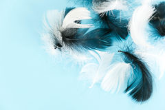 Feathers abstract background. Background for design with soft colorfull feathers pattern. Soft fluffy feathers on Stock Image
