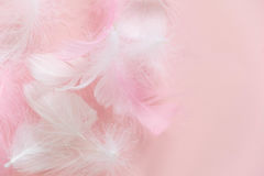 Feathers abstract background. Background for design with soft colorfull feathers pattern. Soft fluffy feathers on. Feathers abstract background. Background for stock photo
