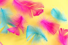 Feathers abstract background. Background for design with soft colorfull feathers pattern. Soft fluffy feathers on turquoise, day d. Feathers abstract background royalty free stock images