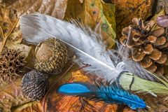 Feathers and acor. Feathers and acrons with leaves on the forest floor Royalty Free Stock Photo