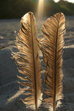 Feathers against the sun #3.  royalty free stock photo