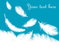 Feathers background Stock Photo