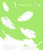 Feathers background Stock Photography