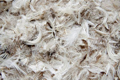 Feathers, background Royalty Free Stock Photo