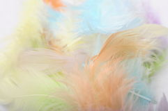 Feathers for background Stock Image