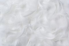 Feathers background. White, delicate feathers suitable for background Royalty Free Stock Images