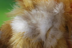 Feathers. Beautiful bouquet of feathers under the scrutiny of a macro lens Stock Photo