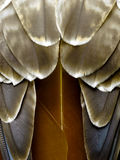 Feathers from a Bird of Prey - Red Hawk Royalty Free Stock Images