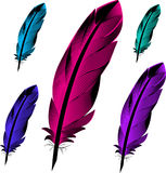 Feathers birds. Colored Royalty Free Stock Images
