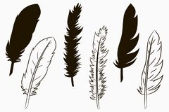 Feathers of birds. Set of silhouette and line drawn feather. Vector. Feathers of birds. Set of silhouette and line drawn feather. Vector illustration vector illustration