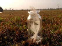 feathers bottle royalty free stock photos