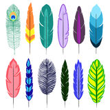 Feathers. Bright bird feathers. Isolated objects on white background royalty free illustration