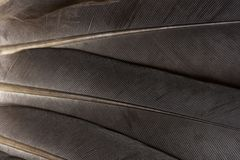 Feathers bsckground royalty free stock images