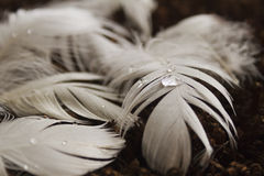 Feathers on Carpet Royalty Free Stock Images