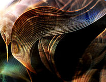 Feathers, close up Royalty Free Stock Photo