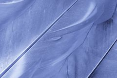 Feathers. Close Up of Texture Background of Feathers Royalty Free Stock Images