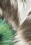 Feathers closeup Royalty Free Stock Photography
