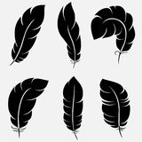 Feathers collection. Six elegant feathers for your design and decoration. Vector illustration can be scale to any size and easy to edit Stock Image