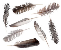 Feathers. Collection of feathers isolated on white background stock photos