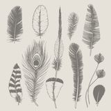 Feathers collection. Vintage design set. Hand-drawn illustration stock images