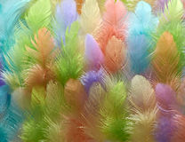 Feathers colored background. Soft and gentle theme. Beautiful feathers of various Royalty Free Stock Images