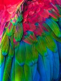 Feathers. Feathers of colorful Ara parrot Royalty Free Stock Photography