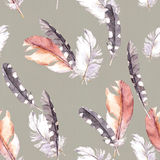 Feathers drawing. Watercolor seamless pattern. Grey paper background Royalty Free Stock Photo