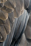 Feathers of an eagle royalty free stock photo
