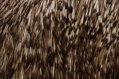 Feathers of emu, Australia's largest bird Stock Photos