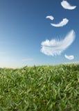 Feathers falling Stock Image
