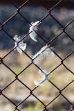 Feathers in Fence. Feathers caught on fence on sunny dayrn Royalty Free Stock Images