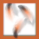 Feathers Frame Royalty Free Stock Photos