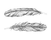 Feathers Royalty Free Stock Photography