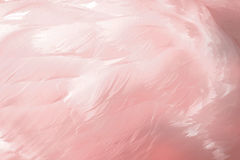 Feathers With A Hint Of Pink Stock Image